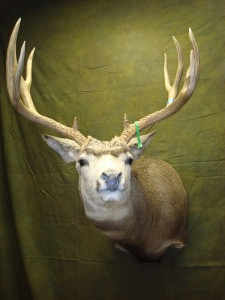 Full-sneak mule deer