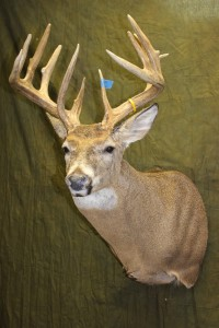 Semi-sneak whitetail multiple tine repair