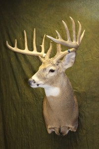 upright wall pedestal whitetail2
