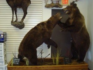 Grizzly bears, fighting