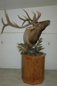 Elk aggressive pedestal