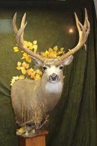 Mule Deer, Pedestal (3)