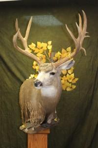 Mule Deer, pedestal (2)
