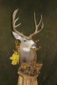 Mule Deer, pedestal