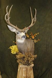 Mule deer, pedestal2
