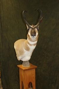 Pronghorn pedestal