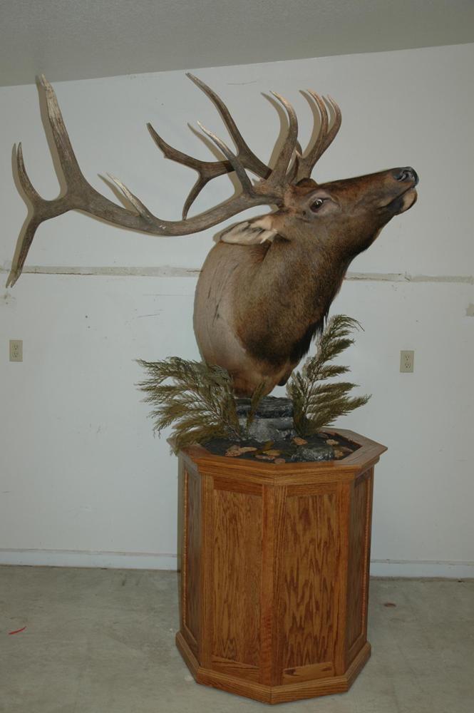 Elk-aggressive-pedestal